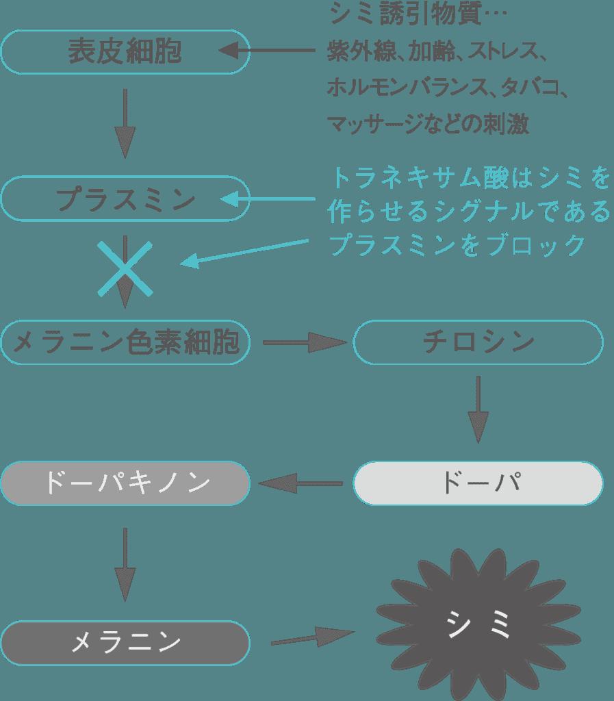 トラネキサム酸の作用