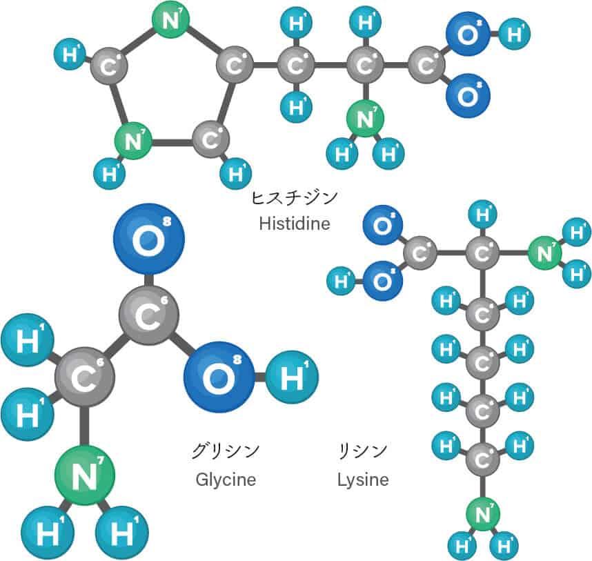 パルミトイルトリペプチド-1に含まれるアミノ酸