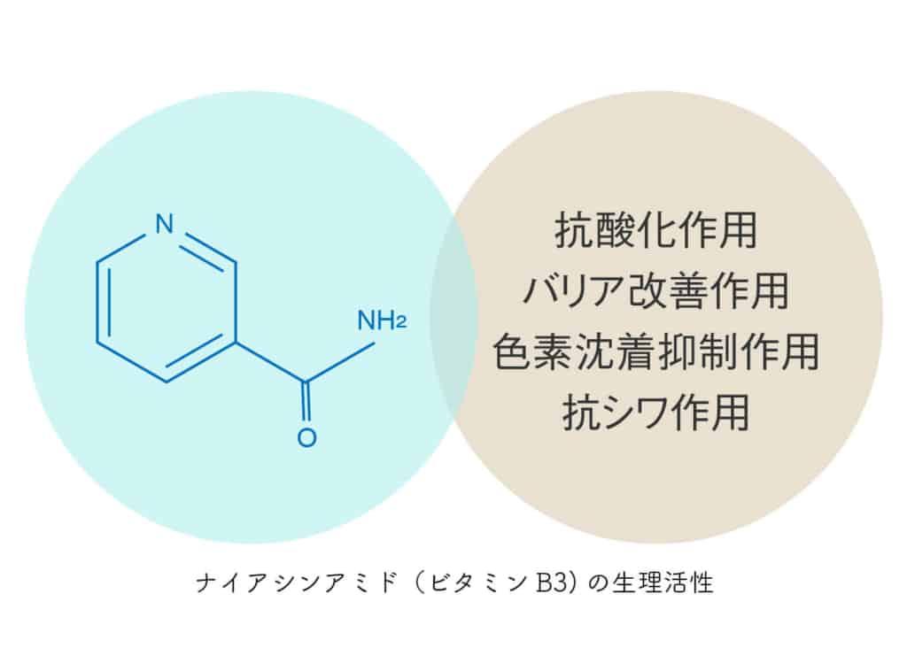 ナイアシンアミドの生理活性